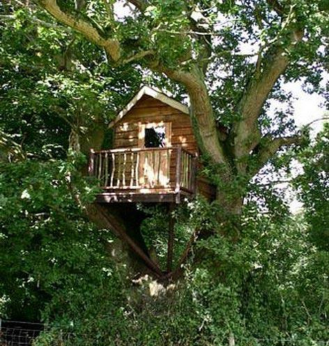oak-tree-house